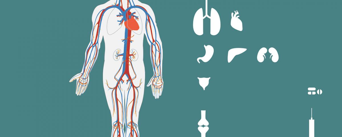 How Aloe Vera Improves Joint Health